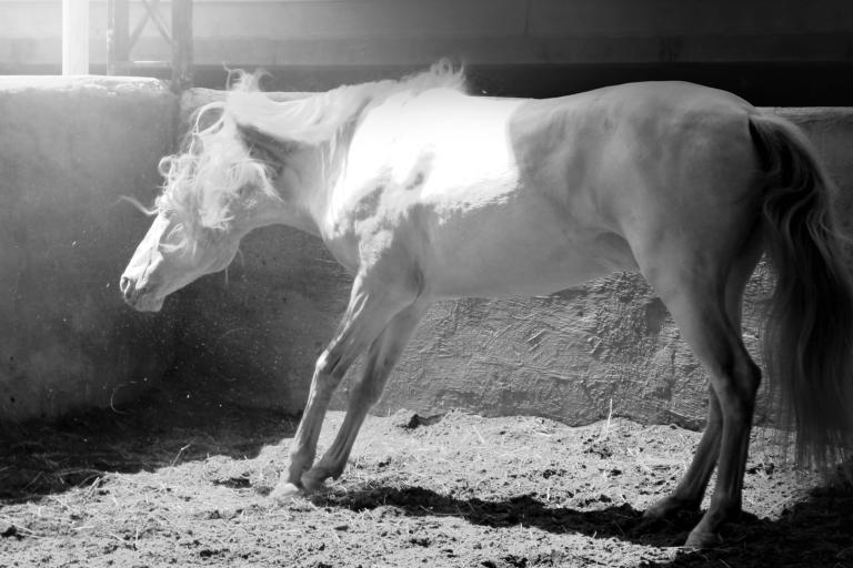 haras-cantareira-katia-ricomini-fotoprime-net-cavalo-06