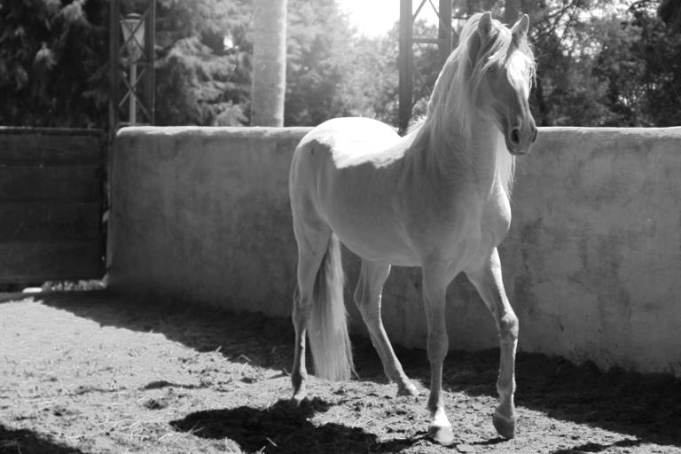 haras-cantareira-katia-ricomini-fotoprime-net-cavalo-26